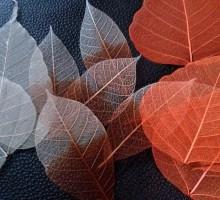 Različno skeletno listje