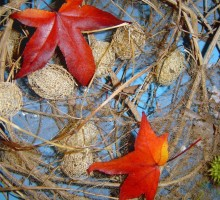 Skeleti rastline v naravi